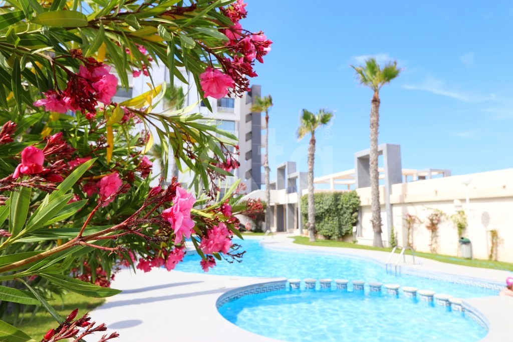 2 bedroom Apartment in Torrevieja  - NH116018 - 16