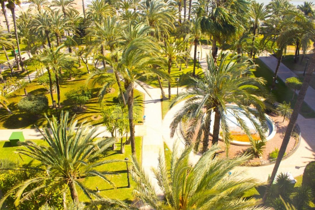 Appartement de 3 chambres à Torrevieja - W8706 - 22