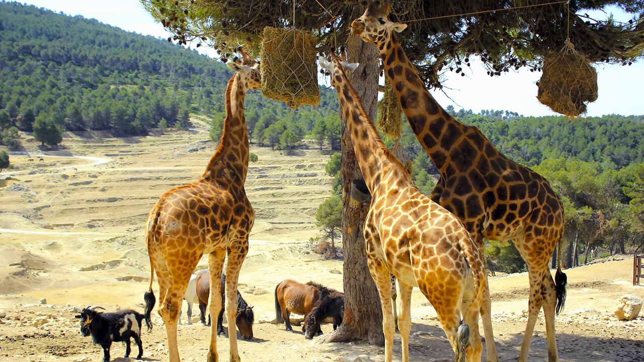 Safari Aitan Costa Blanca