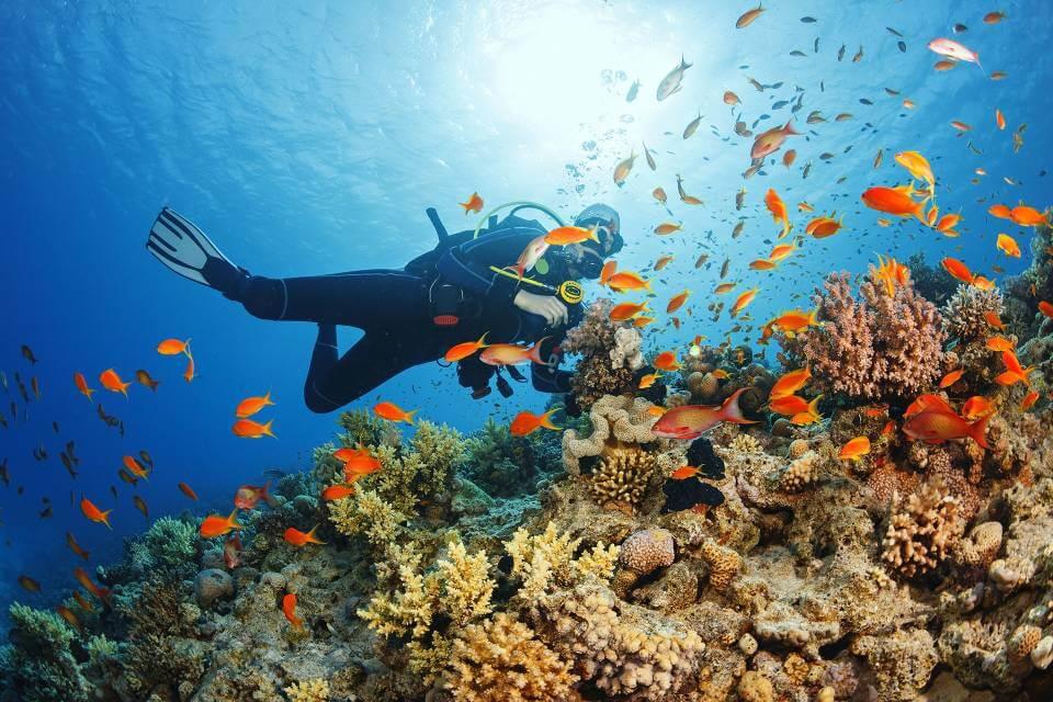 Diving in Villamartin